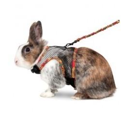 Petral+ramal artjoy l conejo
