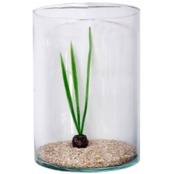 Pecera cilindrica 35x25cm 16l (arena+planta)