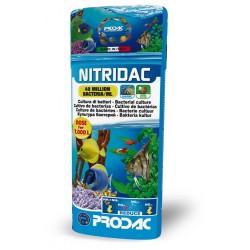 Prodac nitridac bacterias 100ml