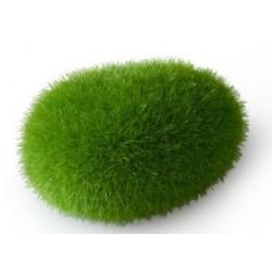 Roca moss ball s 6x4.5x3.5cm