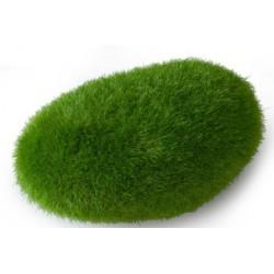 Roca moss ball m 10x6.5x5cm
