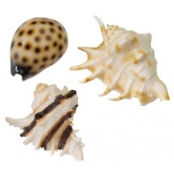 Concha resina sea shell 8.5-10cm