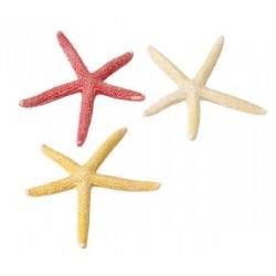 Estrella starfish s 10cm