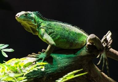 Accesorios para reptiles