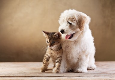Accesorios para perros y gatos